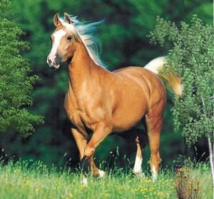 Escursioni a cavallo_Fotor